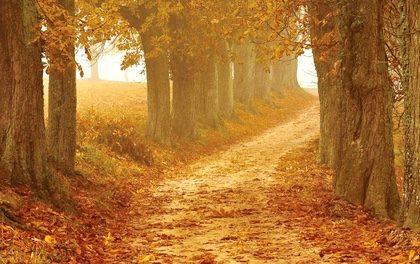 Manifesting My Golden Path